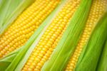 corn1112