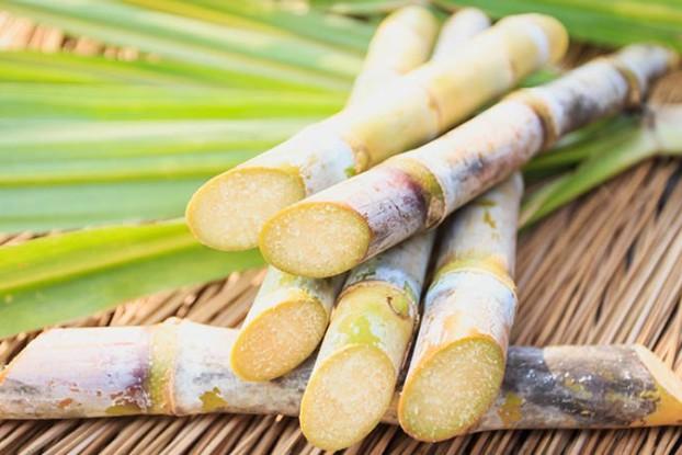 sugar cane412