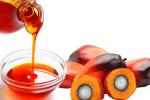 palm oil1001